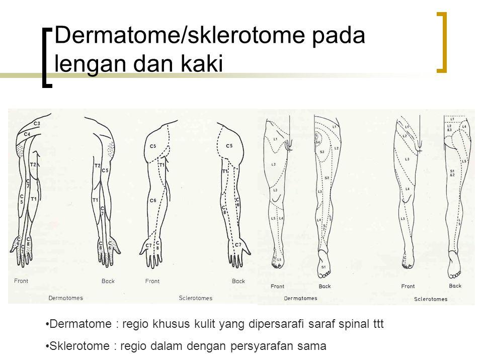 Dermatome/sklerotome pada lengan dan kaki