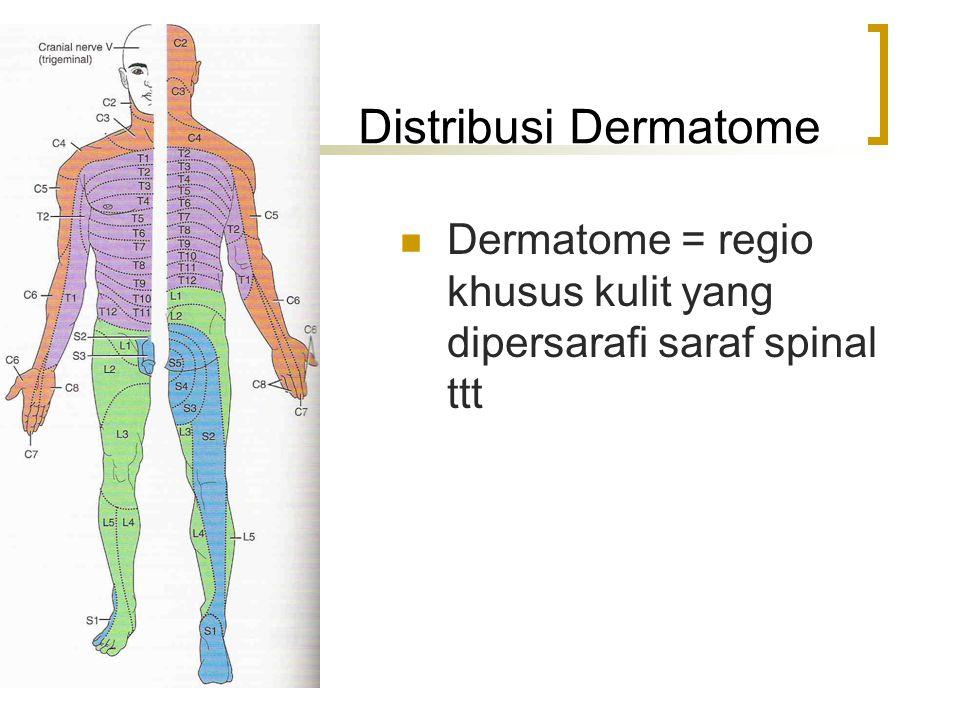 Distribusi Dermatome Dermatome = regio khusus kulit yang dipersarafi saraf spinal ttt
