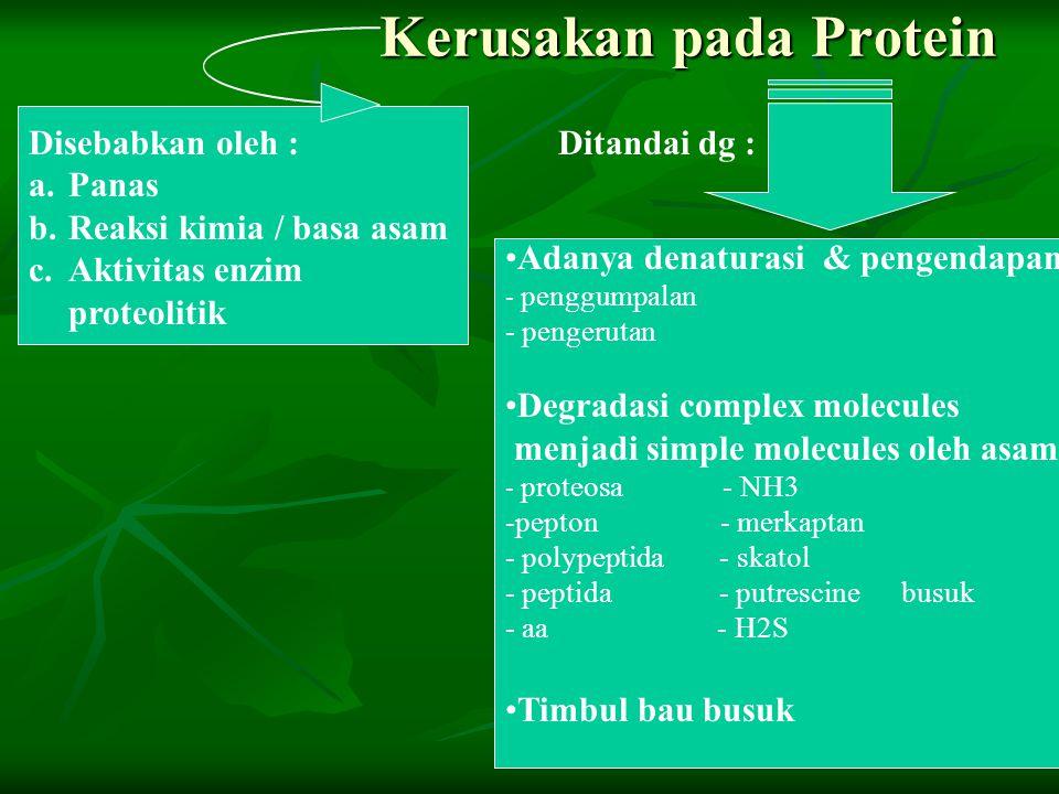 Kerusakan pada Protein