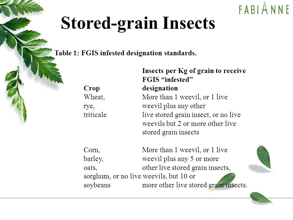 Stored-grain Insects Table 1: FGIS infested designation standards.