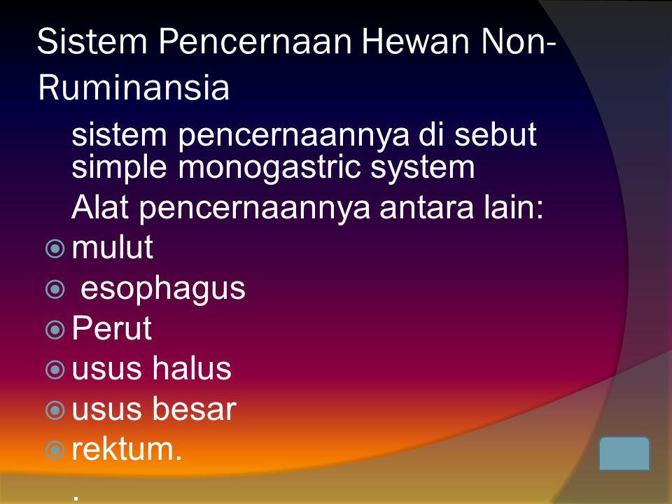 Sistem Pencernaan Hewan Non-Ruminansia
