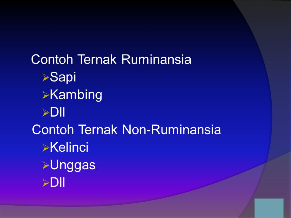 Contoh Ternak Non-Ruminansia Kelinci Unggas