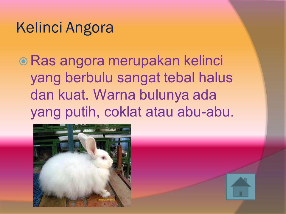 Kelinci Angora Ras angora merupakan kelinci yang berbulu sangat tebal halus dan kuat.