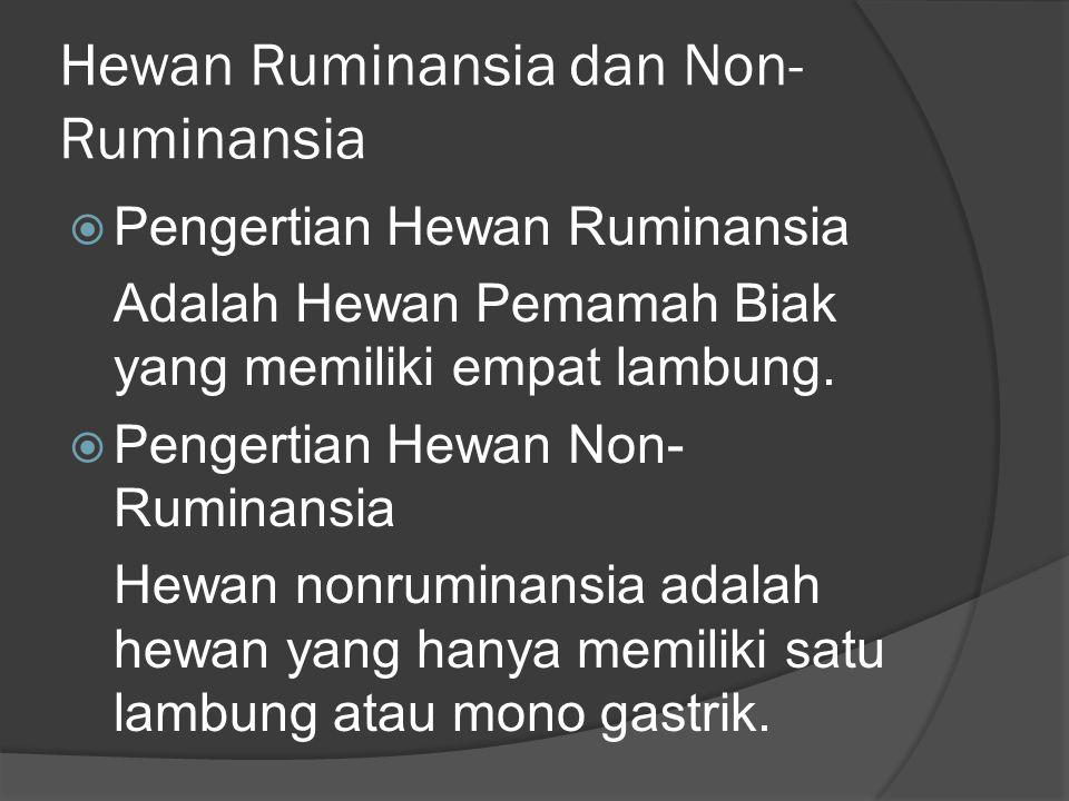 Hewan Ruminansia dan Non-Ruminansia