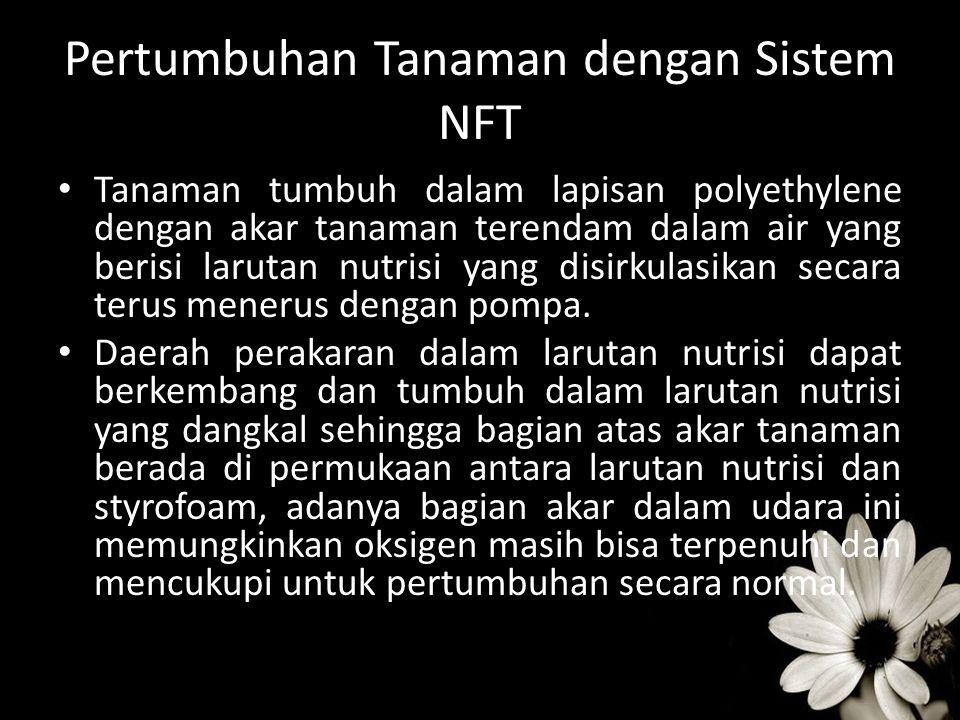 Pertumbuhan Tanaman dengan Sistem NFT