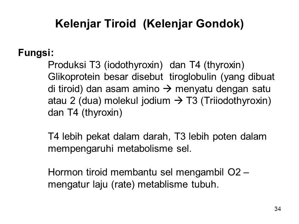 Kelenjar Tiroid (Kelenjar Gondok)