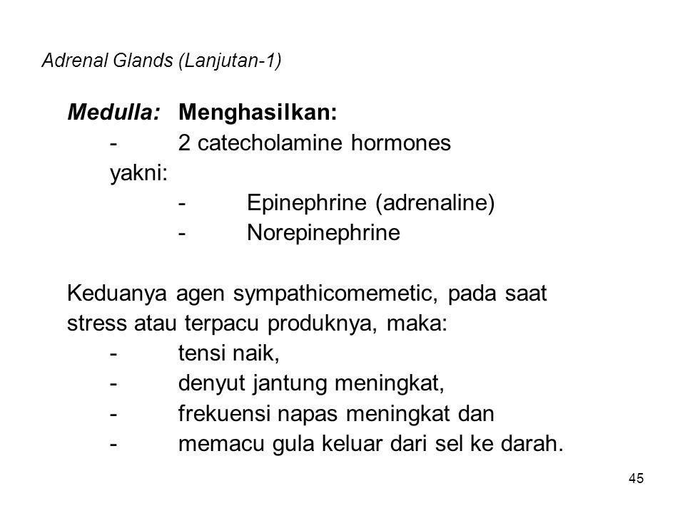Adrenal Glands (Lanjutan-1)