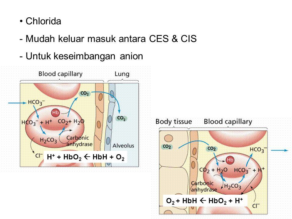 Mudah keluar masuk antara CES & CIS Untuk keseimbangan anion