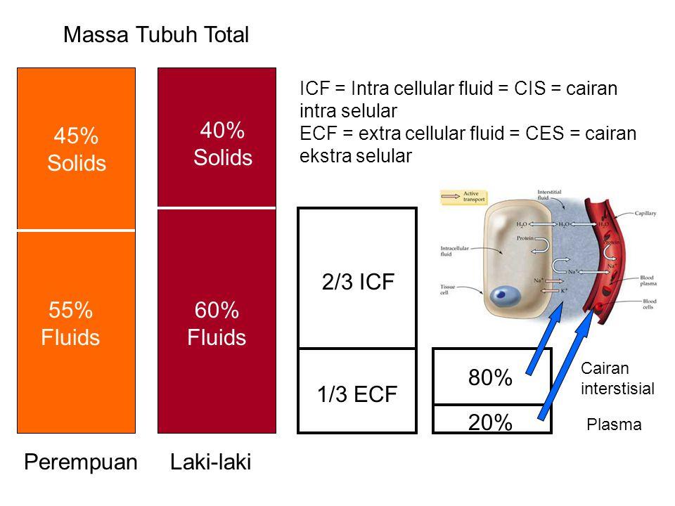 Massa Tubuh Total 40% Solids 45% Solids 2/3 ICF 55% Fluids 60% Fluids