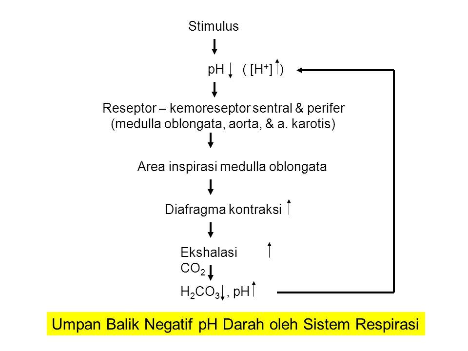 Umpan Balik Negatif pH Darah oleh Sistem Respirasi