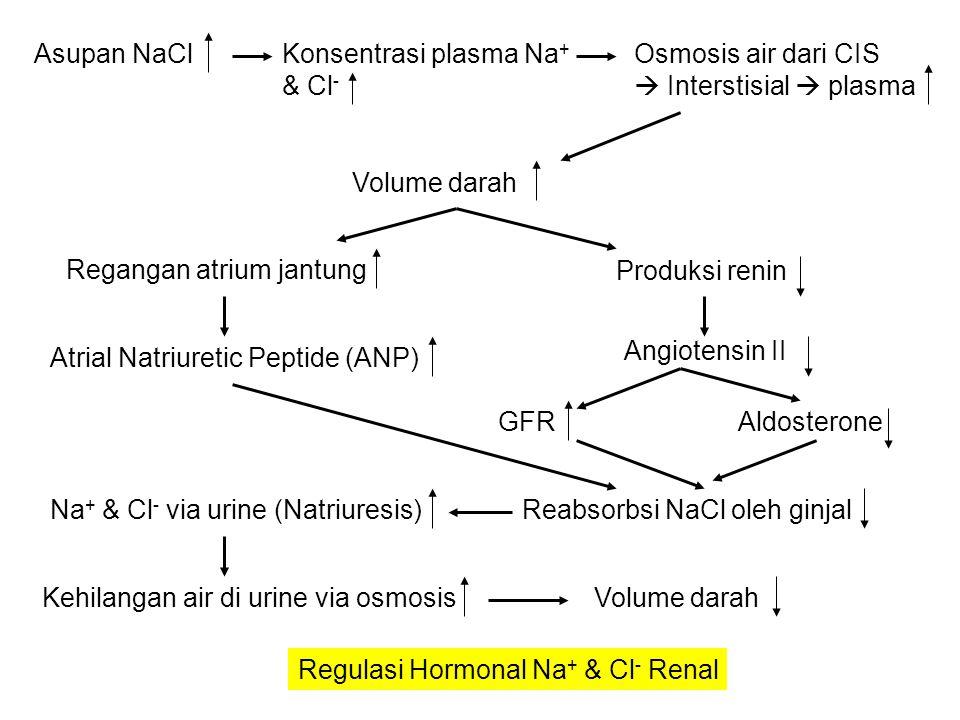 Asupan NaCl Konsentrasi plasma Na+ & Cl- Osmosis air dari CIS.  Interstisial  plasma. Volume darah.