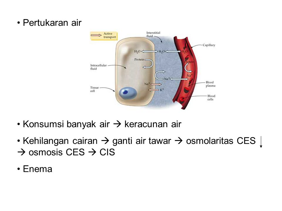 Pertukaran air Konsumsi banyak air  keracunan air. Kehilangan cairan  ganti air tawar  osmolaritas CES  osmosis CES  CIS.