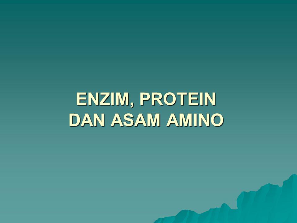 ENZIM, PROTEIN DAN ASAM AMINO