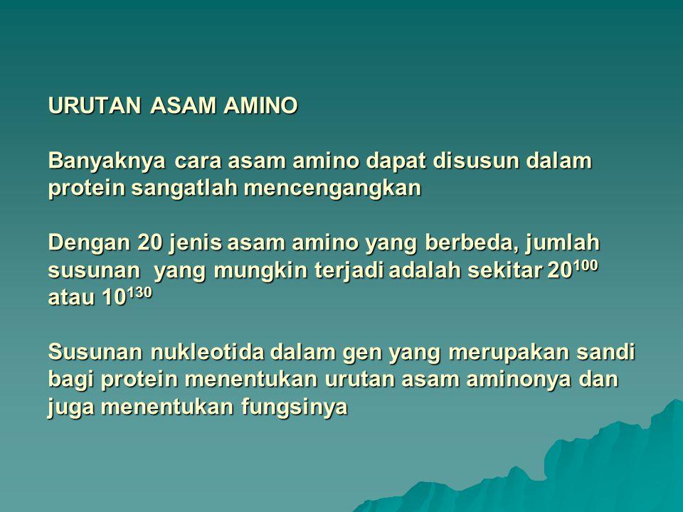 URUTAN ASAM AMINO Banyaknya cara asam amino dapat disusun dalam protein sangatlah mencengangkan Dengan 20 jenis asam amino yang berbeda, jumlah susunan yang mungkin terjadi adalah sekitar 20100 atau 10130 Susunan nukleotida dalam gen yang merupakan sandi bagi protein menentukan urutan asam aminonya dan juga menentukan fungsinya
