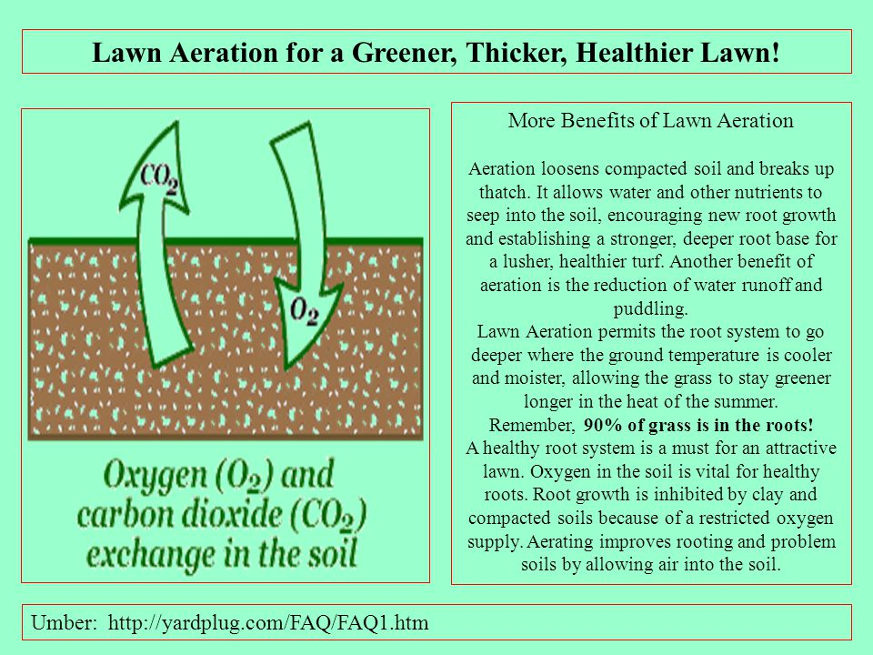Lawn Aeration for a Greener, Thicker, Healthier Lawn!