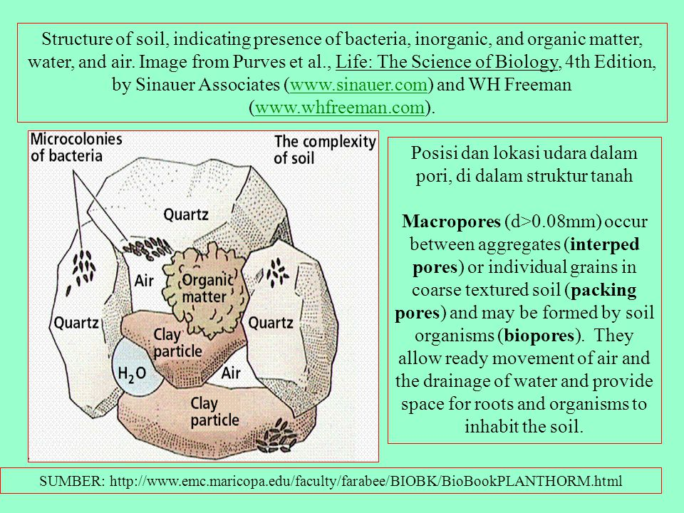 Posisi dan lokasi udara dalam pori, di dalam struktur tanah
