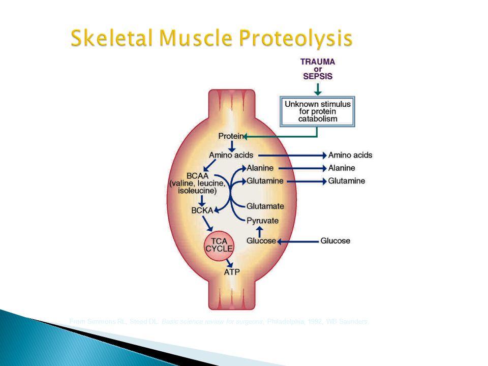 Skeletal Muscle Proteolysis
