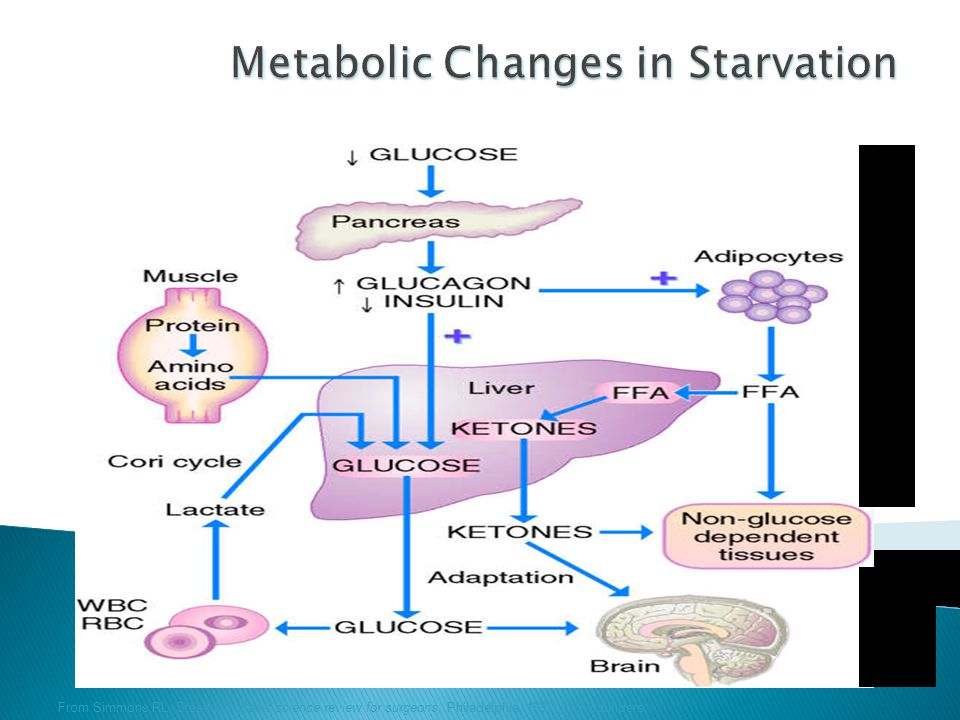 Metabolic Changes in Starvation