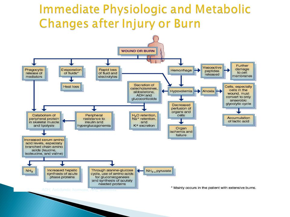 Immediate Physiologic and Metabolic Changes after Injury or Burn