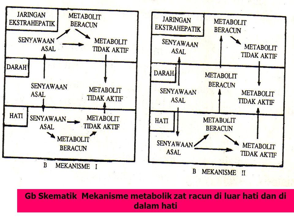 Gb Skematik Mekanisme metabolik zat racun di luar hati dan di dalam hati