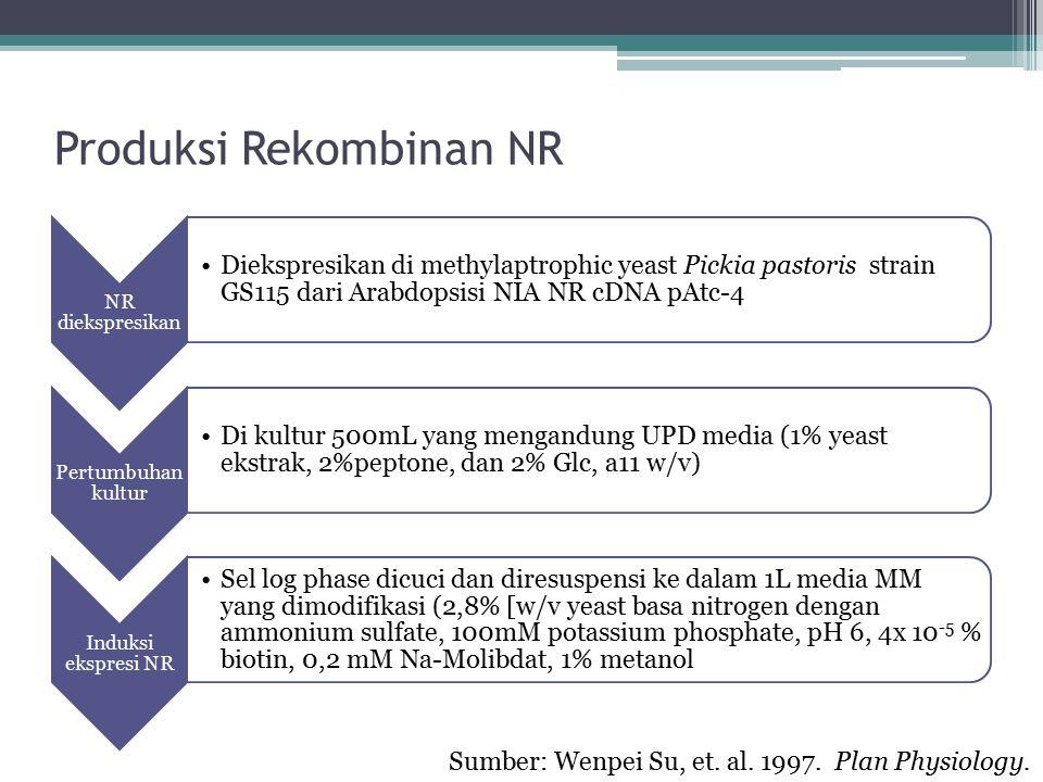 Produksi Rekombinan NR