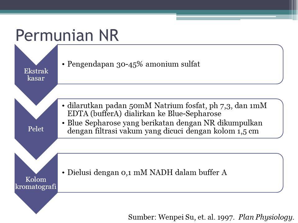 Permunian NR Sumber: Wenpei Su, et. al. 1997. Plan Physiology.