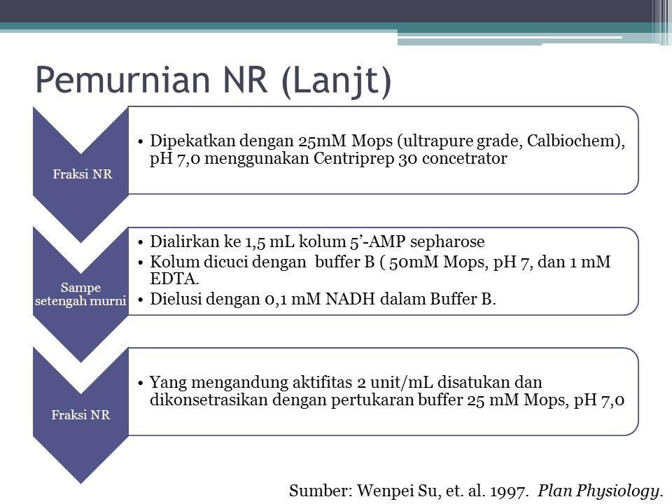 Pemurnian NR (Lanjt) Sumber: Wenpei Su, et. al. 1997. Plan Physiology.