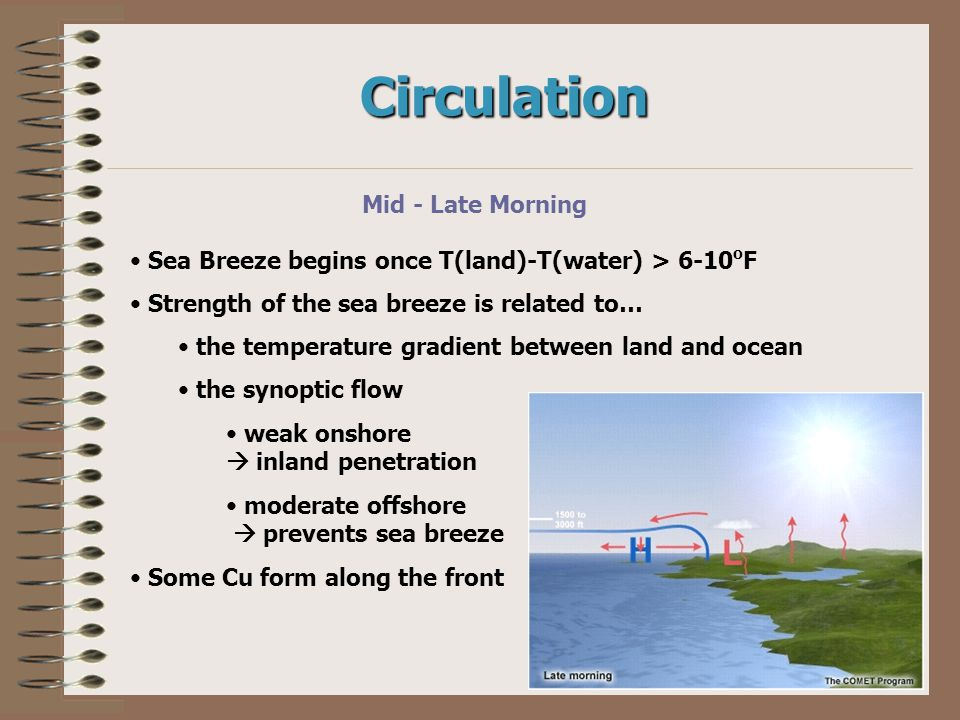 Circulation Mid - Late Morning