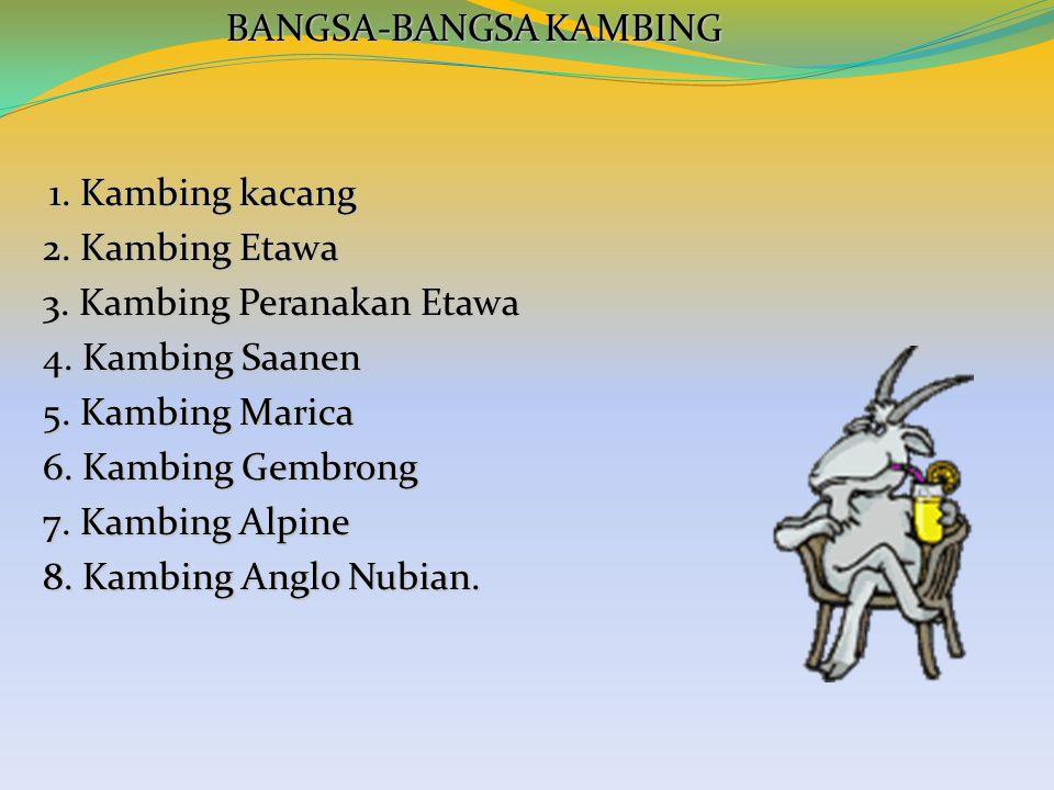 BANGSA-BANGSA KAMBING