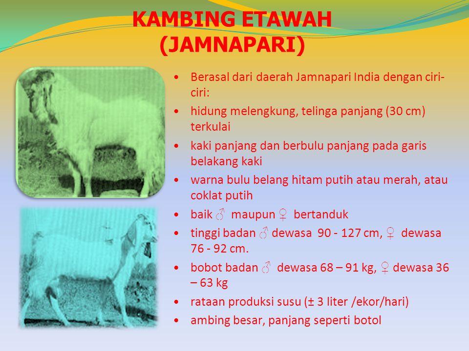 KAMBING ETAWAH (JAMNAPARI)