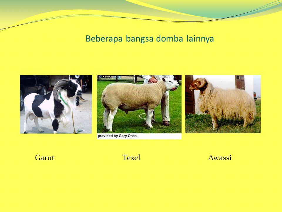 Beberapa bangsa domba lainnya