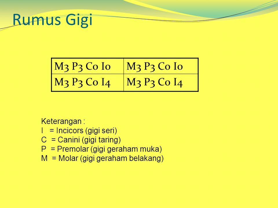 Rumus Gigi M3 P3 C0 I0 M3 P3 C0 I4 Keterangan :
