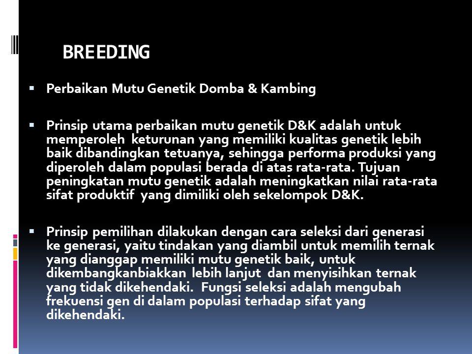 BREEDING Perbaikan Mutu Genetik Domba & Kambing