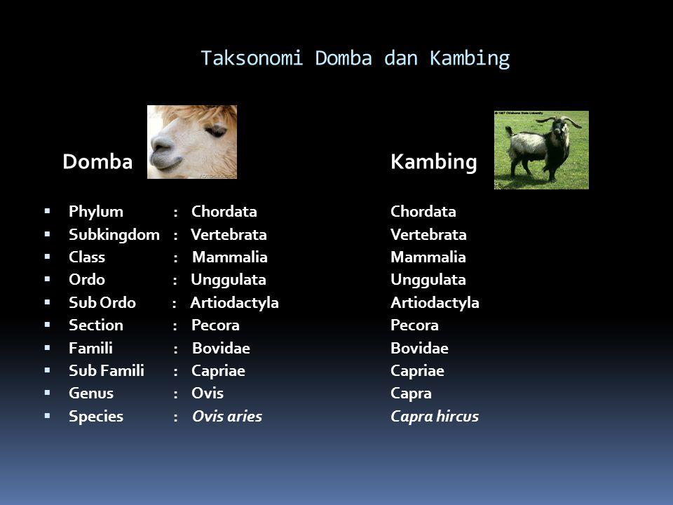 Taksonomi Domba dan Kambing