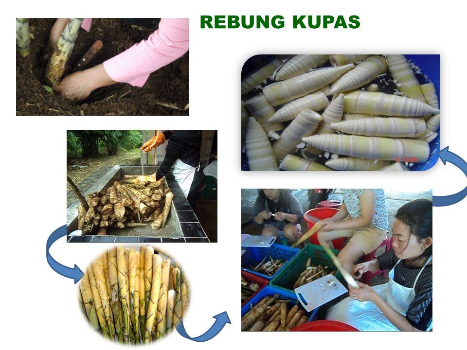REBUNG KUPAS