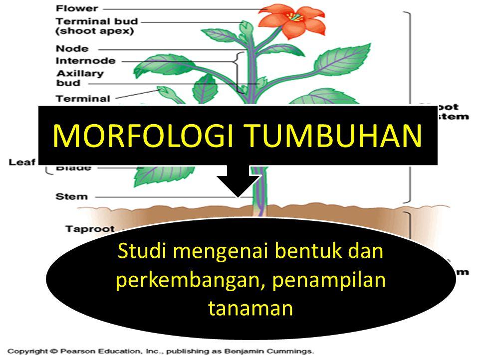 Studi mengenai bentuk dan perkembangan, penampilan tanaman
