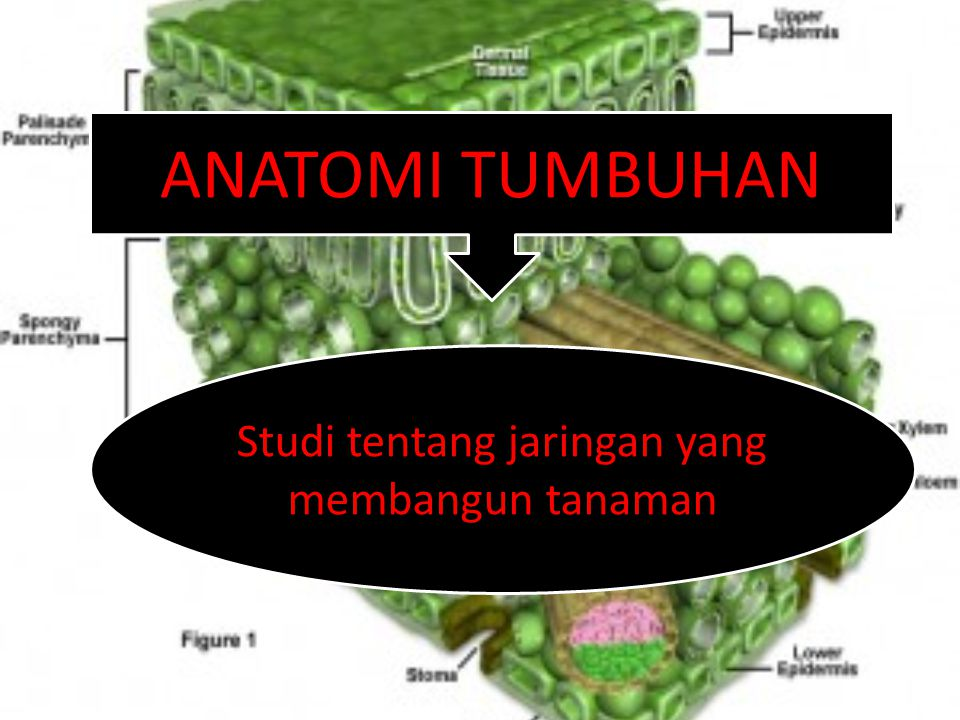 Studi tentang jaringan yang membangun tanaman