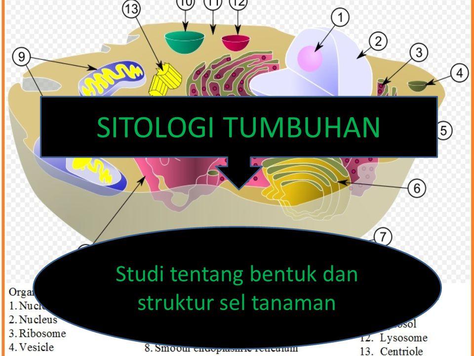 Studi tentang bentuk dan struktur sel tanaman