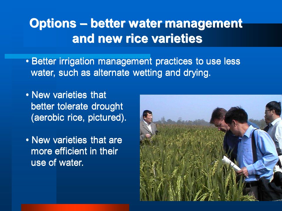 Options – better water management and new rice varieties