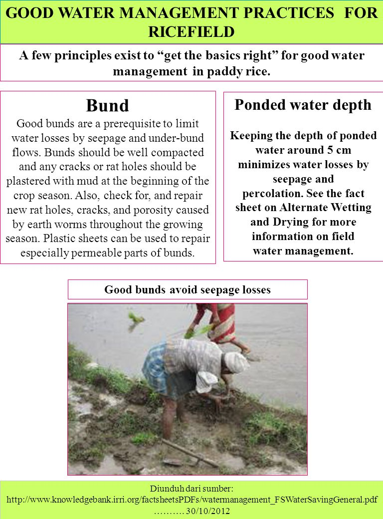 Bund GOOD WATER MANAGEMENT PRACTICES FOR RICEFIELD Ponded water depth