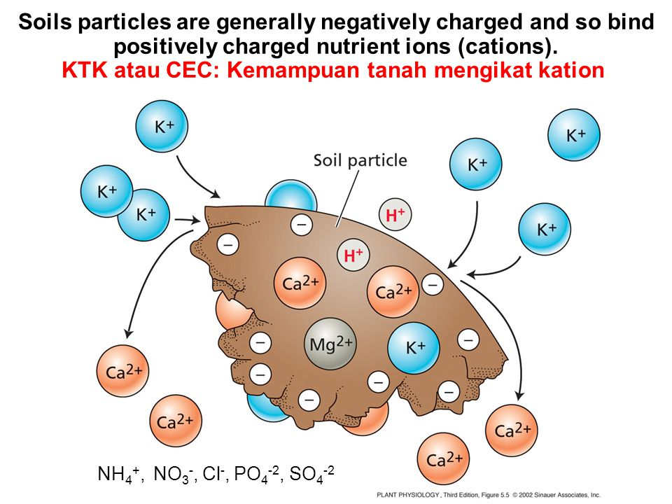 Soils particles are generally negatively charged and so bind