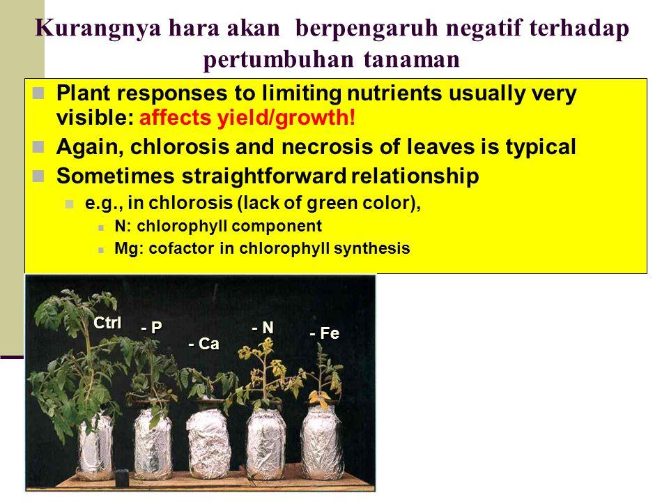 Kurangnya hara akan berpengaruh negatif terhadap pertumbuhan tanaman