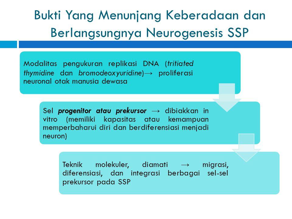 Bukti Yang Menunjang Keberadaan dan Berlangsungnya Neurogenesis SSP
