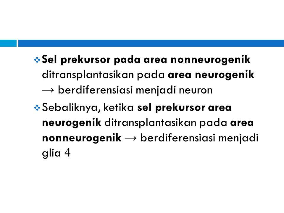 Sel prekursor pada area nonneurogenik ditransplantasikan pada area neurogenik → berdiferensiasi menjadi neuron