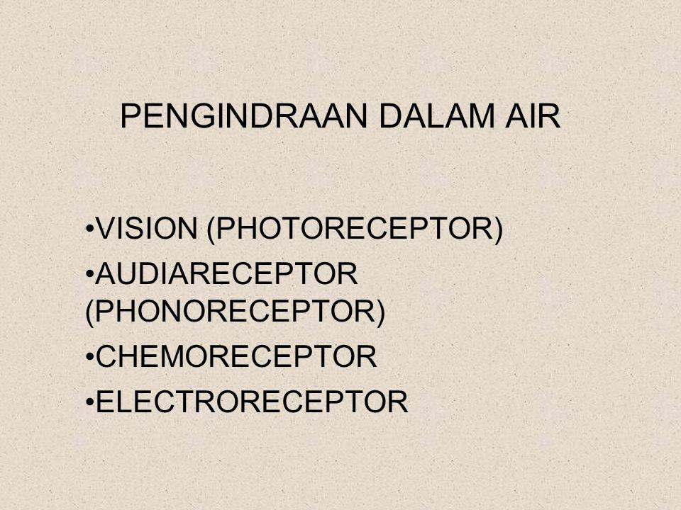 PENGINDRAAN DALAM AIR VISION (PHOTORECEPTOR)
