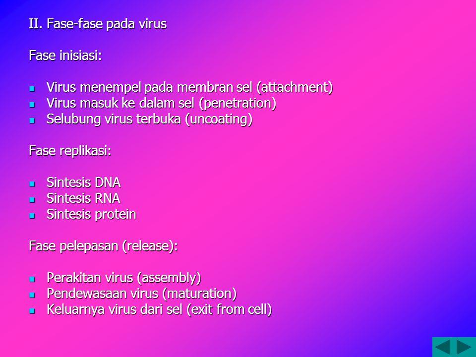 II. Fase-fase pada virus
