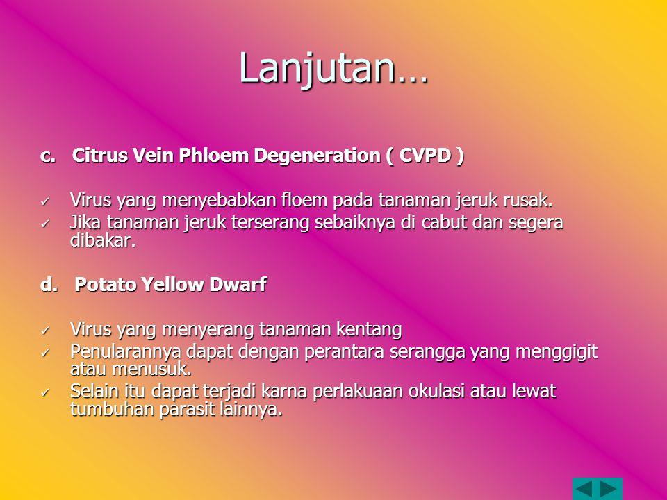 Lanjutan… c. Citrus Vein Phloem Degeneration ( CVPD )