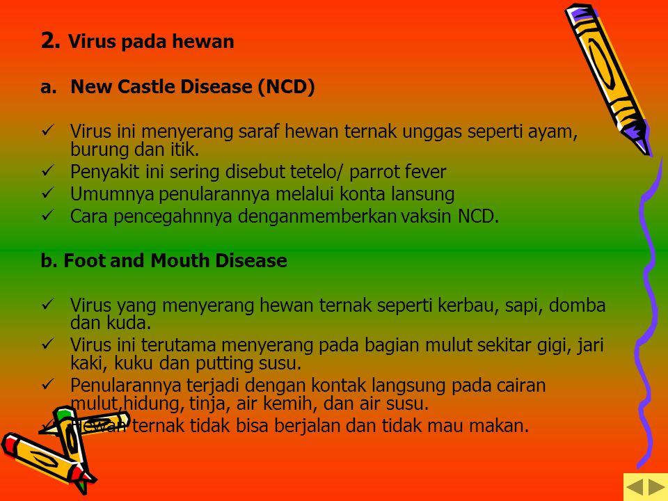 2. Virus pada hewan New Castle Disease (NCD)