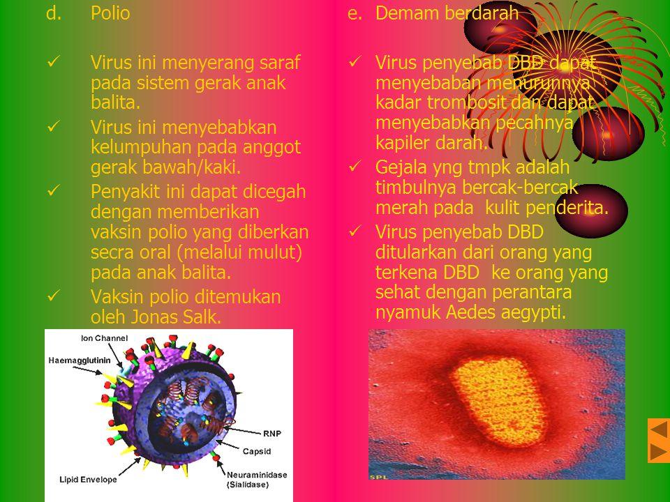 Polio Virus ini menyerang saraf pada sistem gerak anak balita. Virus ini menyebabkan kelumpuhan pada anggot gerak bawah/kaki.