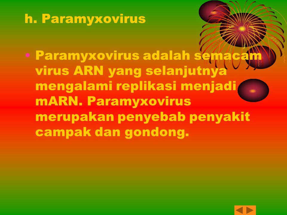 h. Paramyxovirus